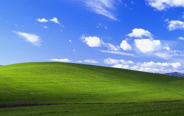 Là dove c'era l'erba ora c'è: un vigneto. Lo sfondo di Windows XP oggi
