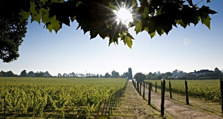 Bordeaux, nuove varietà contro il cambiamento climatico
