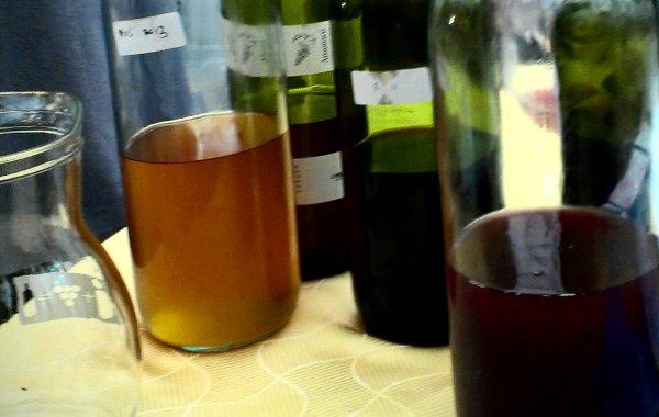 Fornovo e ritorno. Il vino naturale assomiglia al Fronte popolare di Giudea dei Monty Phyton in Brian di Nazareth