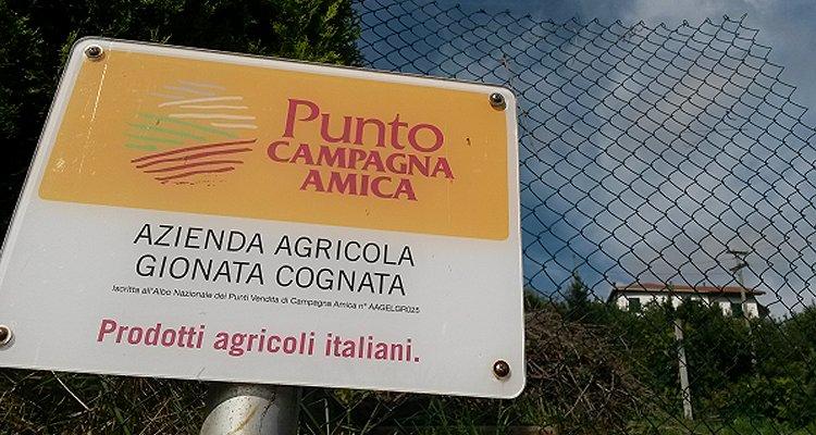 I lavori autostradali su Genova mettono a rischio il vigneto di Gionata Cognata