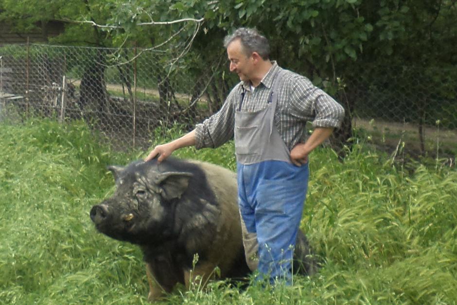 Il meglio della settimana in cui ho sognato Doriano Scibè, l'uomo che sussurrava ai maiali*