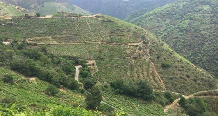 Spagna, tutto quello che avreste sempre voluto sapere sui vini della Galizia