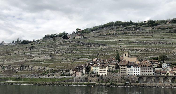 Svizzera, due o tre cose che ho imparato sullo Chasselas