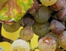 Archivi tag: batteri nel vino