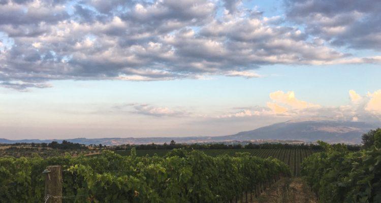 Il senso di De Fermo per i vini di Loreto Aprutino