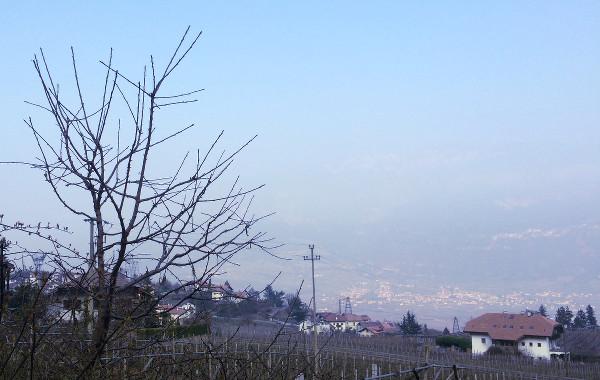 Il Concorso nazionale del Pinot nero a Montagna, il Brettanomyces ed altre storie