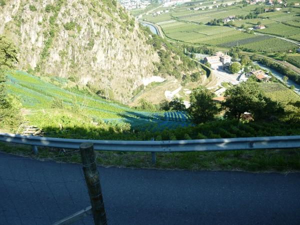 Vigneto Riesling Castel Juval