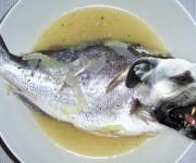Pesce Pitbull