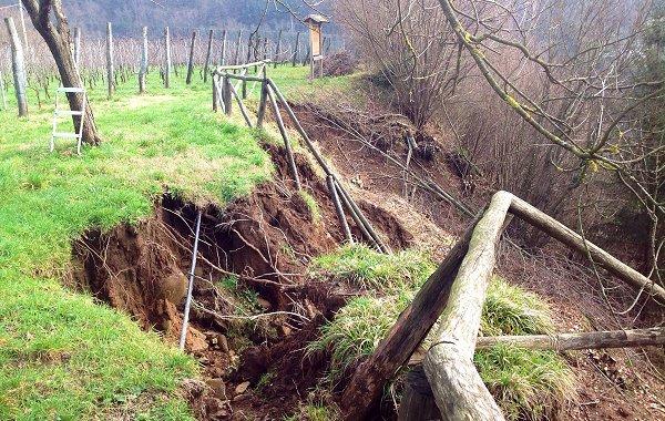 Piove sul vigneto Italia. Che fare? La testimonianza di un viticoltore coinvolto nei disastri, Podere Concori
