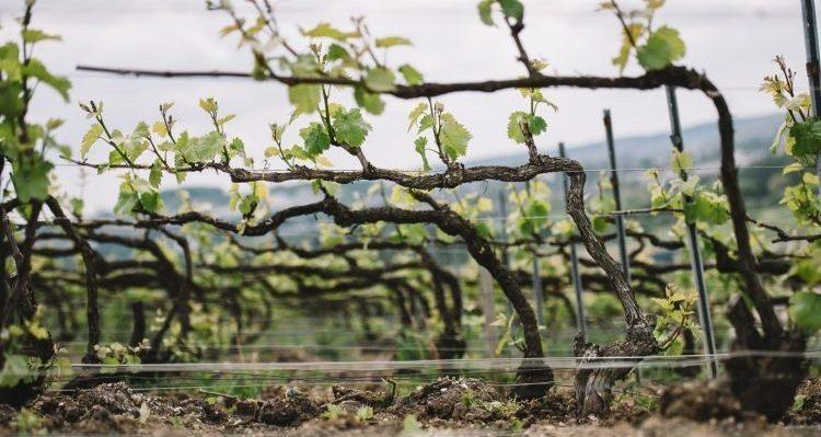 Assaggi Modena Champagne 2021: Montagne de Reims e Vallée de la Marne