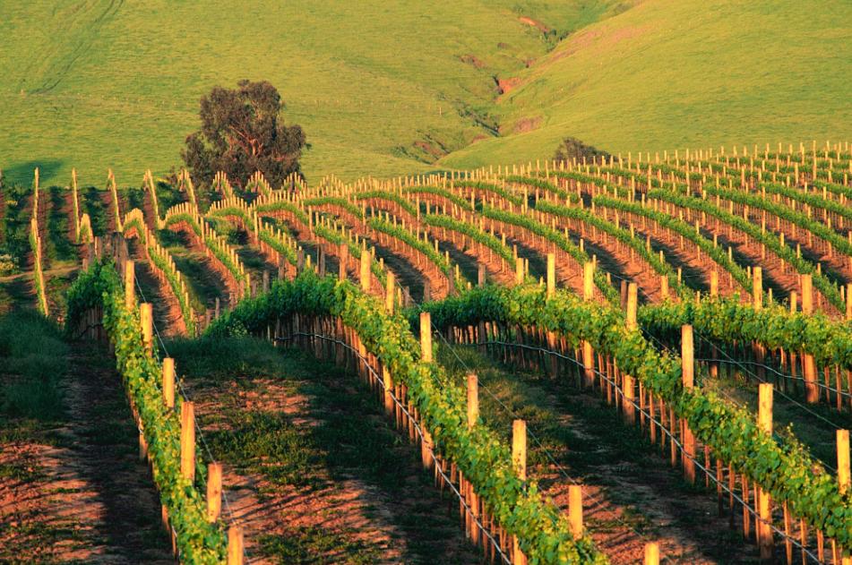 Corrispondenza di amorosi sensi enoici: i vini del Carso, per esempio