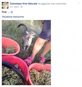 gatti vendemmia
