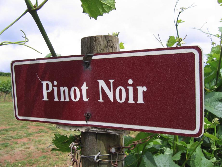Sorpresa: il Cabernet non è più il vitigno preferito dai consumatori