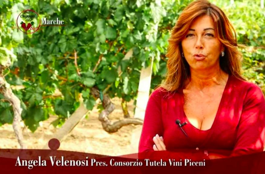 Il meglio della settimana con un commento su I Signori del Vino nelle Marche*