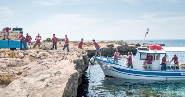 Lo spettacolo di una vendemmia a mare nell'isola Favignana