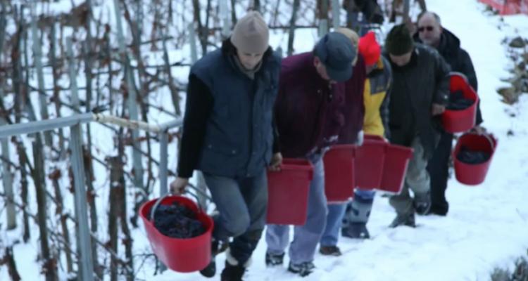 E' già Natale: la magia del vino del ghiaccio di Casa Ronsil