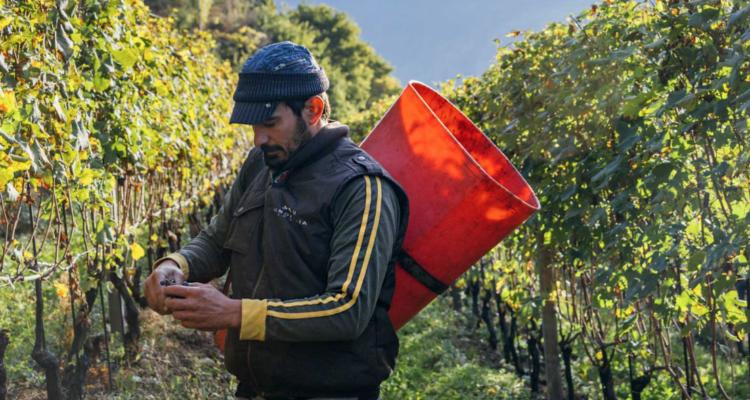 I vini della Valtellina estrema di Marco Fay