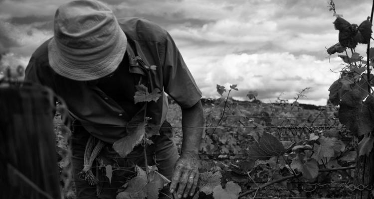 Vini e terre di Borgogna. Intervista a Camillo Favaro (e 12 segnalazioni del ♥)