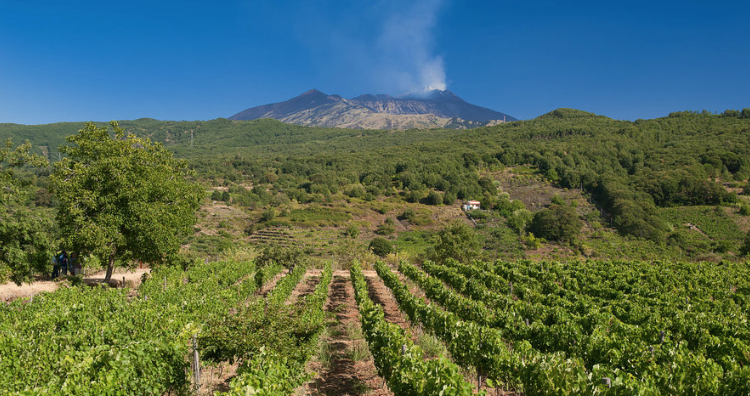 The dark side of the Etna: i vini della Tenuta Monte Gorna