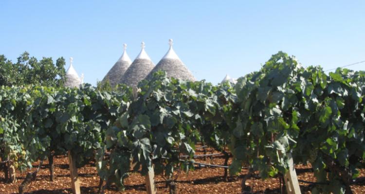 Perché in Puglia si vende Prosecco e non Primitivo? Se lo chiede il senatore Dario Stefàno