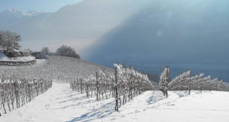 Fabrizio Gallino e la sua idea di Valle d'Aosta in 9 vini