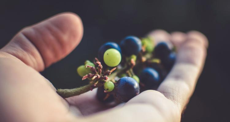 Perché Valoritalia risparmia sulle analisi del vino?