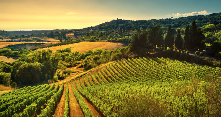 Terre di Pisa 2019: bollicine, bianchi e le DOC rosse Chianti, Montescudaio e Terre di Pisa
