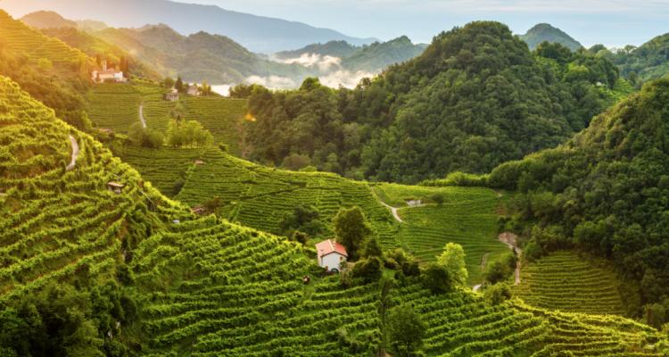 Per l'Unesco le colline del Prosecco di Conegliano e Valdobbiadene sono Patrimonio dell'Umanità