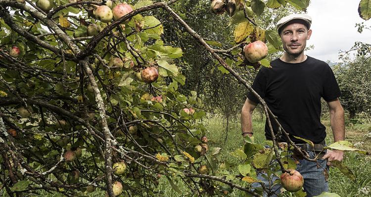 Malus Mama, il sidro di mele che non ti aspetti
