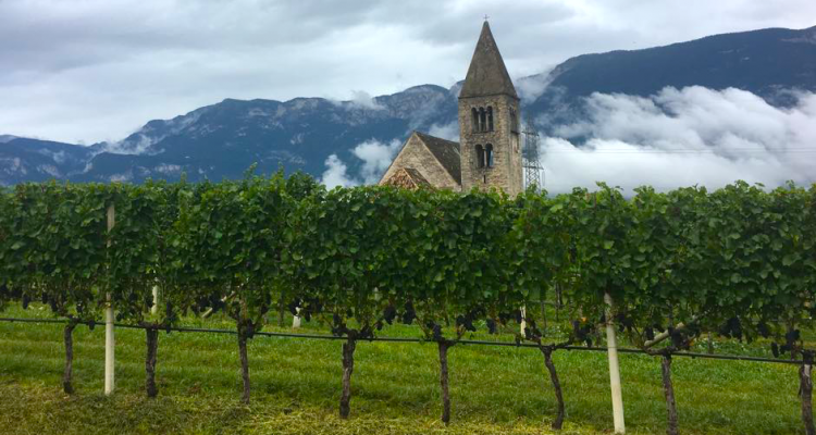 L'Alto Adige Wine Summit spiegato in breve