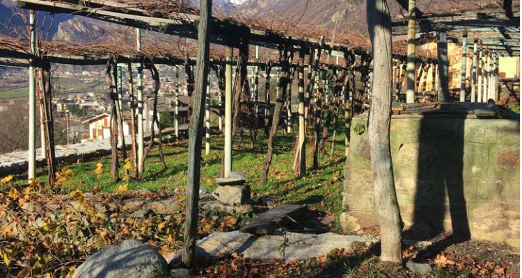 Corso accelerato sui vini della Valle d'Aosta con 3 bottiglie e 2 ciceroni