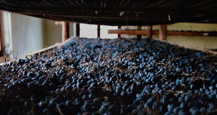 L'Amarone della Valpolicella docg 2016 in anteprima