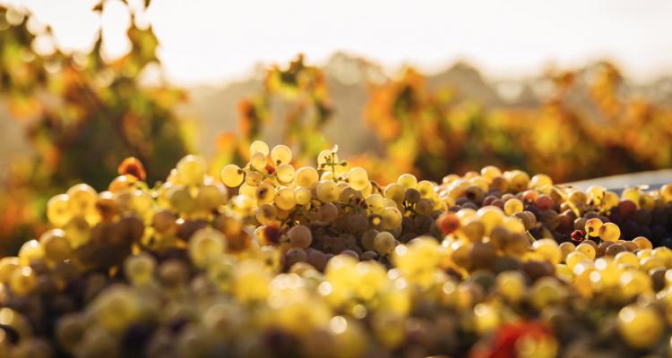 Mendocino County, piccola guida all'altra California del vino