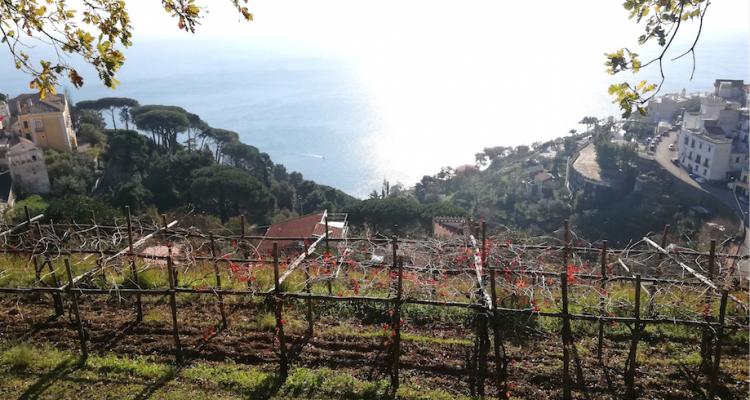 Monte di Grazia e Vigne di Raito, due gioielli della Costa d'Amalfi