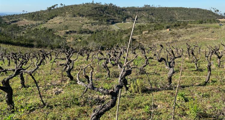 Il vino del Portogallo e i pirati del nuovo millennio