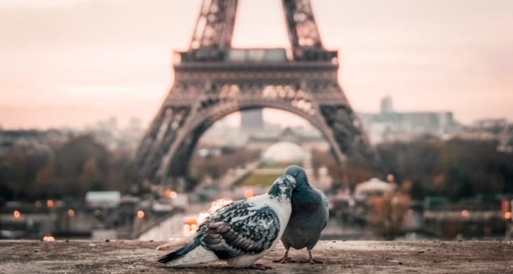Parigi, guida alla bellezza che era e a quella che sarà