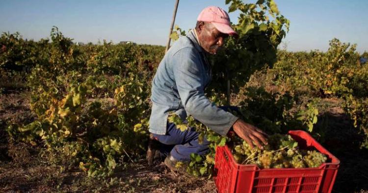 Il Covid 19 e la paurosa crisi del vino in Sud Africa