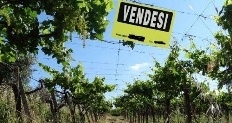 Quanto mi costa un ettaro di vigna in Italia?