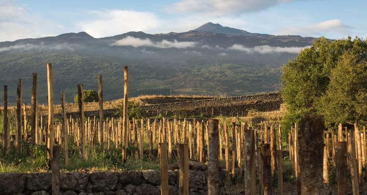 Le bollicine del Vulcano: 5 blanc de noir dell'Etna e un intruso