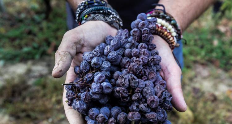 I vini laboratorio di Valdisole, per una nuova idea di Roero
