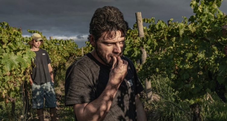 Farhad Bandesh, l'enologo migrante fuggito dall'Iran