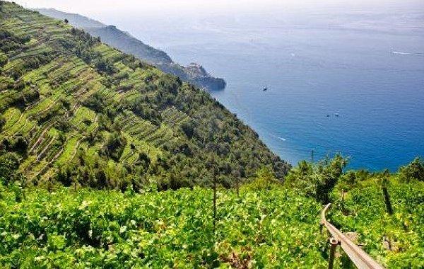 La sottile linea rossa. Un giro in Liguria tra i vini che non sono i soliti bianchi