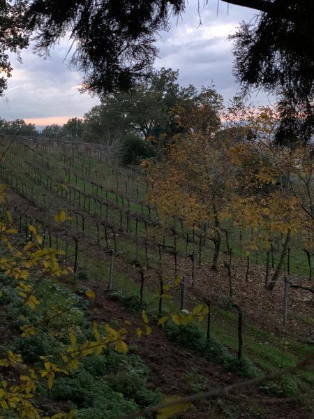 casalpilozzo vigne