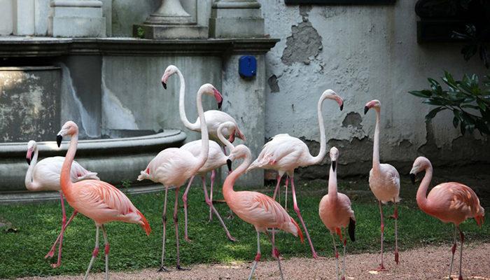 A Milano vive un gruppo di fenicotteri rosa. Stella Retica è un Sassella di Arpepe che vola alto