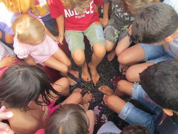 Qui si fa la storia: la cultura vinicola diventa materia scolastica