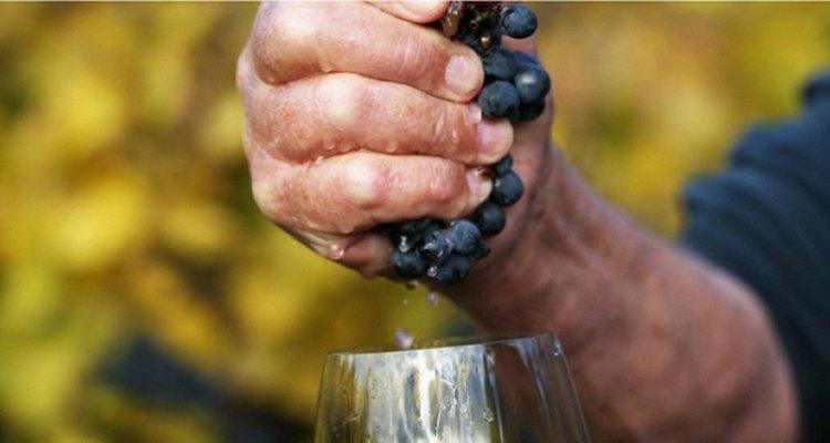 Cos'è per te il vino naturale? La crew di Intravino risponde